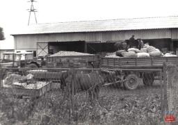 archiwum GOK, archiwum UG, zbiory prywatne_91