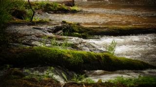 Susiec, rzeka Tanew 2012, fot. DK_20