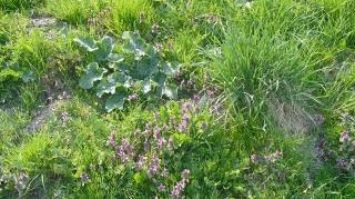 2011.05.16 Szata roślinna gminy Grabowiec