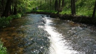 Susiec, rzeka Tanew 2012, fot. DK_16