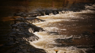Susiec, rzeka Tanew 2012, fot. DK_4