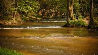 Susiec, rzeka Tanew 2012, fot. DK_5